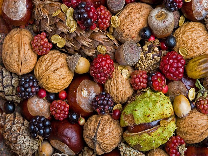 خشکبار و میوه