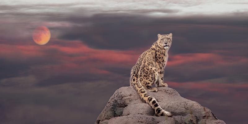 عکس حیوان